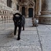 http://www.dalmatia-pictures.com/wp-content/uploads/2012/02/015_Dubrovnik.jpg
