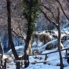 http://www.dalmatia-pictures.com/wp-content/uploads/2012/02/Krka-snijeg_009.jpg