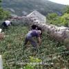 http://www.dalmatia-pictures.com/wp-content/uploads/2012/03/vis_okljucna_013.jpg