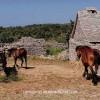 http://www.dalmatia-pictures.com/wp-content/uploads/2012/04/hvar_humac_001.jpg
