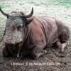 http://www.dalmatia-pictures.com/wp-content/uploads/2012/05/bikijada_radosic_008.jpg
