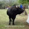 http://www.dalmatia-pictures.com/wp-content/uploads/2012/05/bikijada_radosic_009.jpg