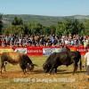 http://www.dalmatia-pictures.com/wp-content/uploads/2012/05/bikijada_radosic_010.jpg