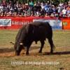 http://www.dalmatia-pictures.com/wp-content/uploads/2012/05/bikijada_radosic_011.jpg