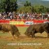 http://www.dalmatia-pictures.com/wp-content/uploads/2012/05/bikijada_radosic_012.jpg