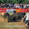 http://www.dalmatia-pictures.com/wp-content/uploads/2012/05/bikijada_radosic_013.jpg