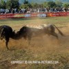 http://www.dalmatia-pictures.com/wp-content/uploads/2012/05/bikijada_radosic_016.jpg