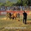 http://www.dalmatia-pictures.com/wp-content/uploads/2012/05/bikijada_radosic_018.jpg
