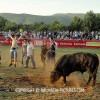 http://www.dalmatia-pictures.com/wp-content/uploads/2012/05/bikijada_radosic_019.jpg