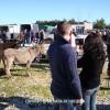 http://www.dalmatia-pictures.com/wp-content/uploads/2012/06/benkovac_sajam_0015.jpg