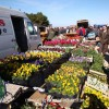 http://www.dalmatia-pictures.com/wp-content/uploads/2012/06/benkovac_sajam_006.jpg